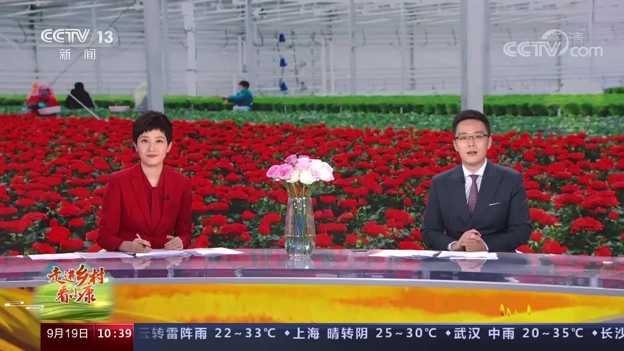[走进乡村看小康]甘肃兰州玫瑰花铺出幸福路