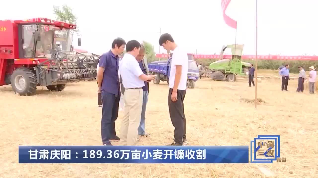 甘肃庆阳:189.36万亩小麦开镰收割